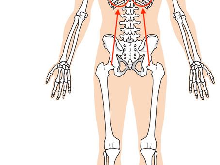 股関節が痛い!それ腎臓が原因かも?奈良で根本的な改善を専門とする整体先生が語る股関節痛改善のヒント!