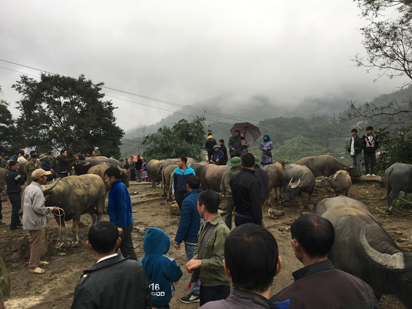 Filming in Vietnam arranged the filming trip for TVN to see ethnic minorities selling buffaloes at Bac Ha market