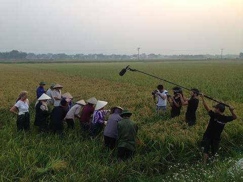 Boom Medya film crew at a ripened rice field in Quoc Oai, Hanoi. The shoot was arranged by Fixer in Vietnam