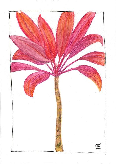 Ilustração Cordiline (Ver opções) - A partir de: