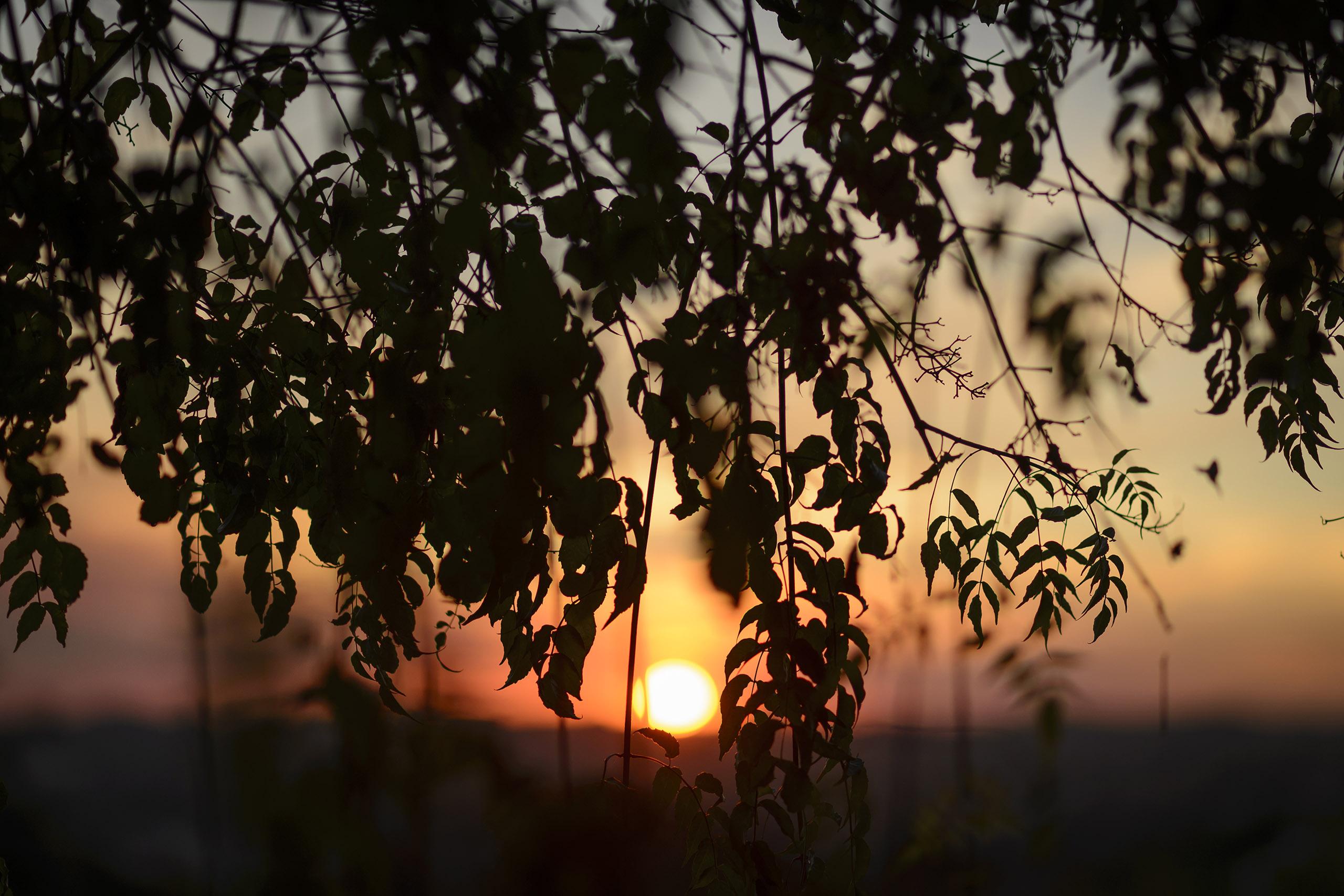 Pousada do Vinhedo - Pôr do Sol