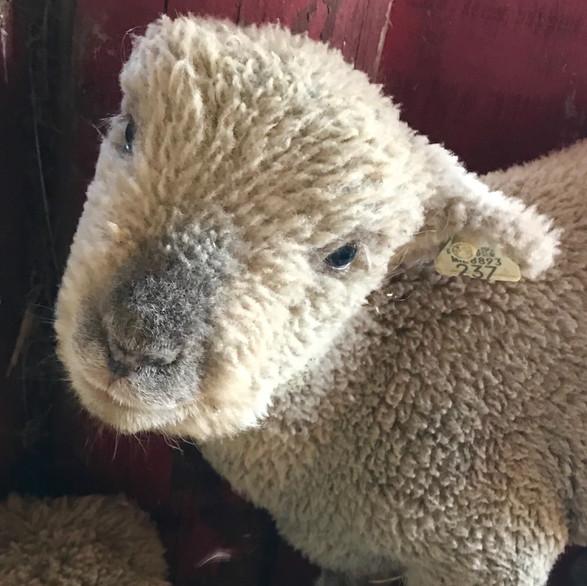 Fuzzy Jeffrey
