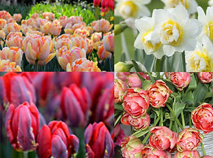 spring share.jpg