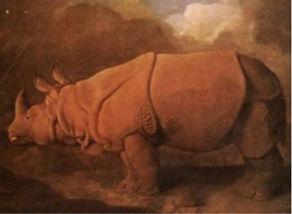 Professor Delbridge parathyroid surgeon Sydney parathyroid glands and the rhinoceros