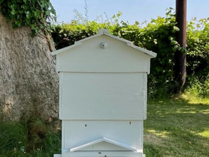 The Story of an Irish Hive