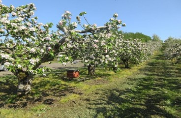 Going to the Apple Orchards