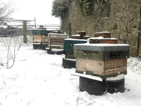 Our Wee Bees