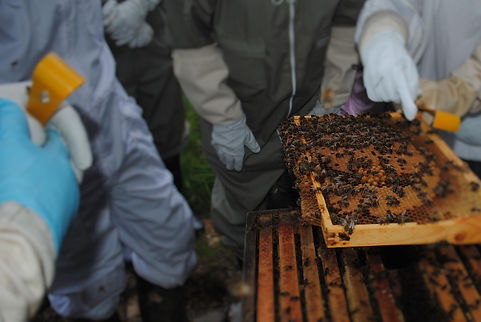 The Killinchy Beekeepers Association Members inspecting a hive