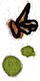 bee%20splot_edited.png