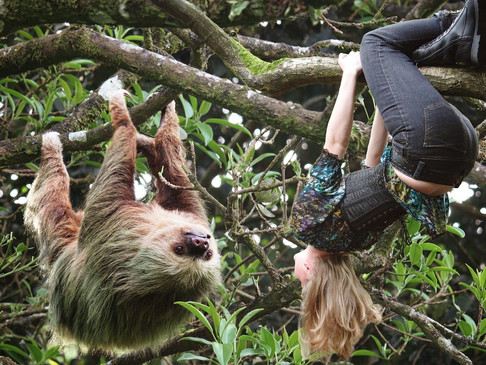 Feeling Like a Sloth? Your Adrenals Could be to Blame