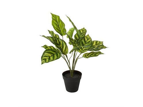 Plante Medium 60X27X27Cm