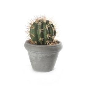 kaktus m/potte sement rund stor 14x20cm Varenr 07014