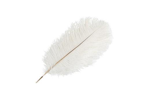 Strutsefjær Hvit 35-40cm