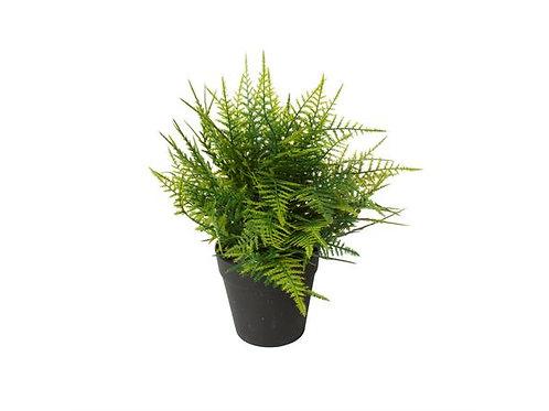 Plante Mini 57X43X54Cm