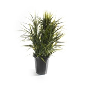 Plante gress 38x38x62cm Varenummer: 06897
