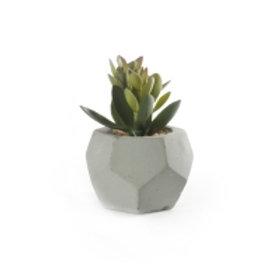 Sukkulent m/potte sement/grønn 9x12cm