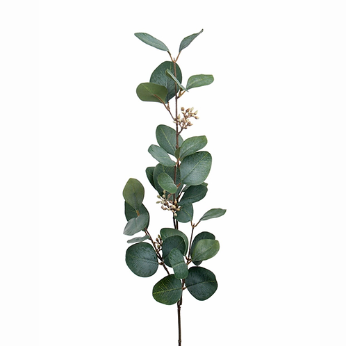 Eucalyptus med bær 70cm 1922-90