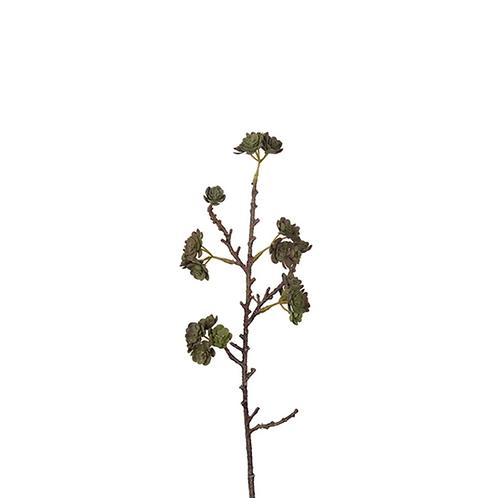 Echeveria 45cm 9914-96