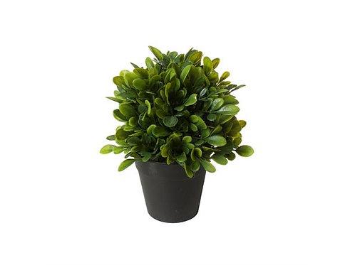 Plante Mini 53X40X46Cm