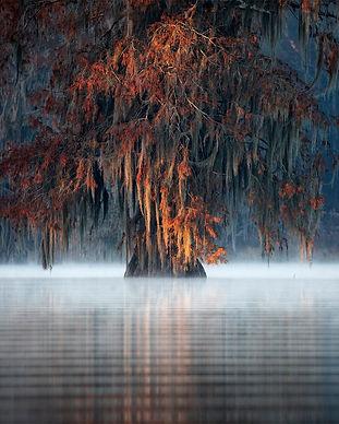 swamps377.jpg