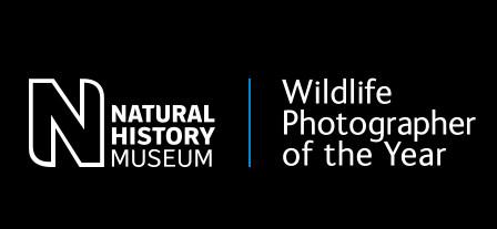 Premiato agli Oscar della fotografia: BBC Wildlife Photographer of the Year 2020