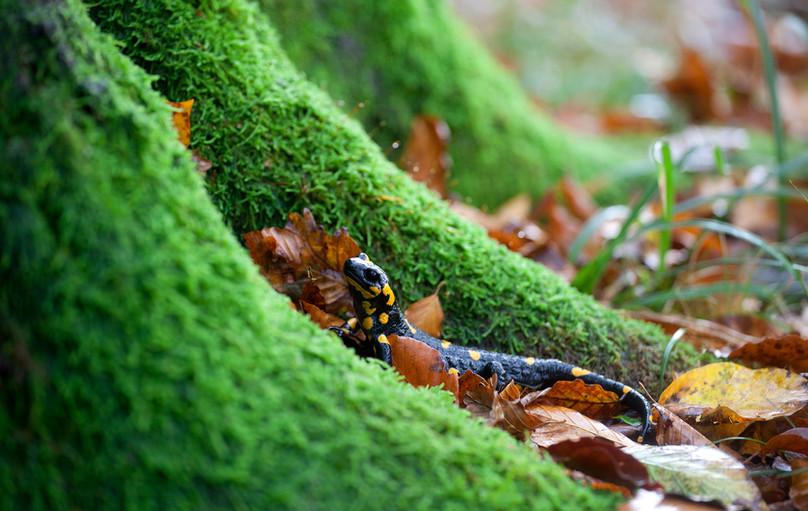 plitvice_croazia_salamandra.jpg