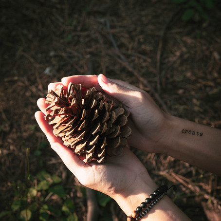 Why Pine Cones are Perfect in your Home All Year