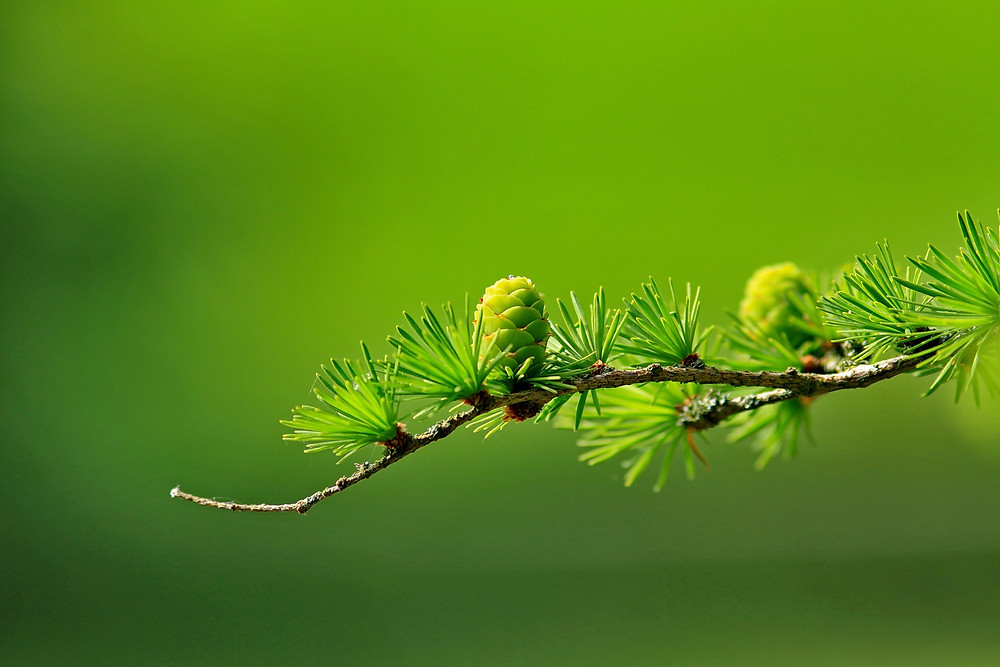 lime green growth new fresh tree