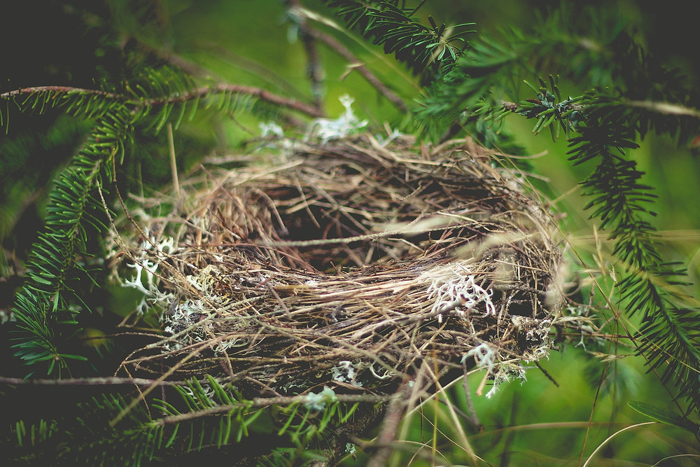 Use Christmas/Winter decorations for nest building