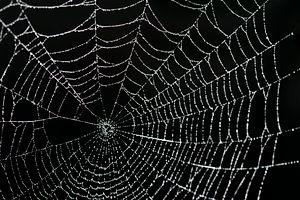 spider_web_droplets.jpg