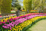 A primavera já floresceu na BeijuBom