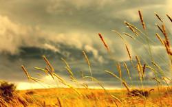summer-desktop-backgrounds-hd.jpg
