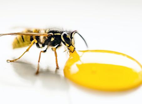 5 Health Benefits of Pure Honey