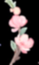 SakuraBlossoms_04.png