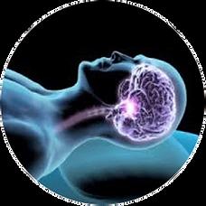 Como o cerebro atua no sono