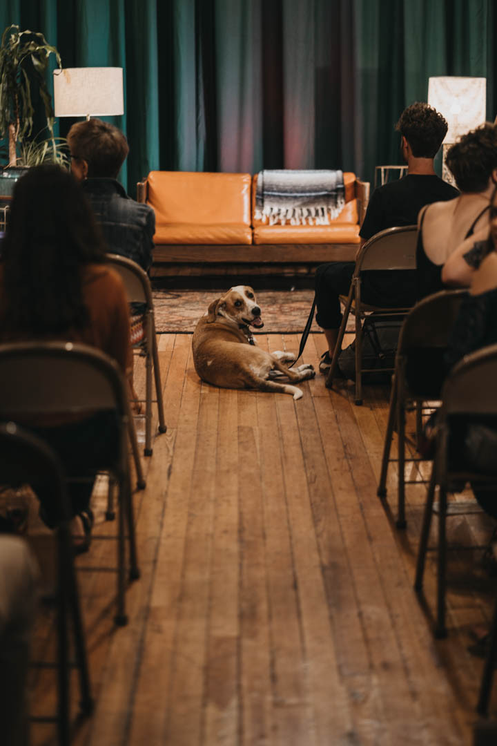 Outrspaces   Dog