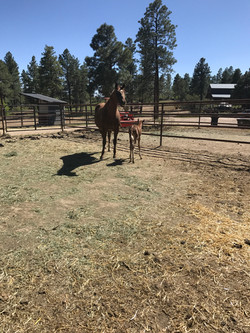 new horse at sauls creek stables