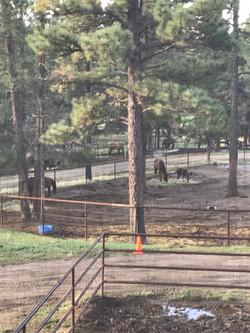 horses in treed paddock area