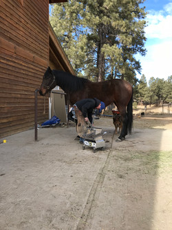 ferrier services at the stables