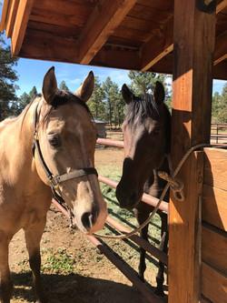 happy horses at the horse motel