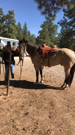 horses getting ready for trail ride