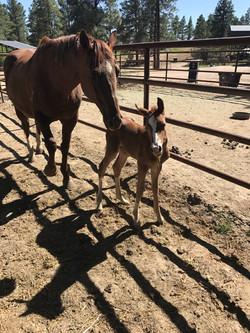 baby horse at Sauls Creek stables
