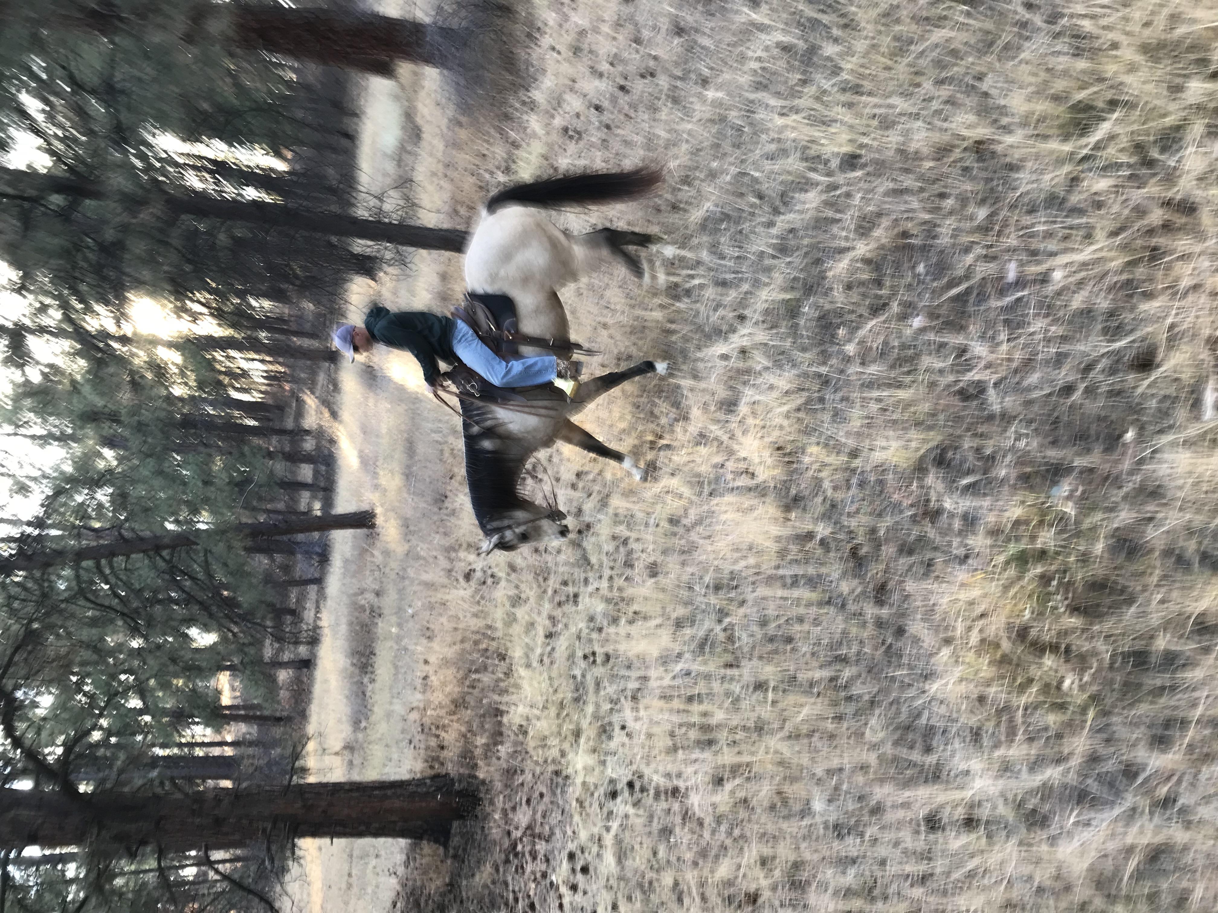 rider on trail ride