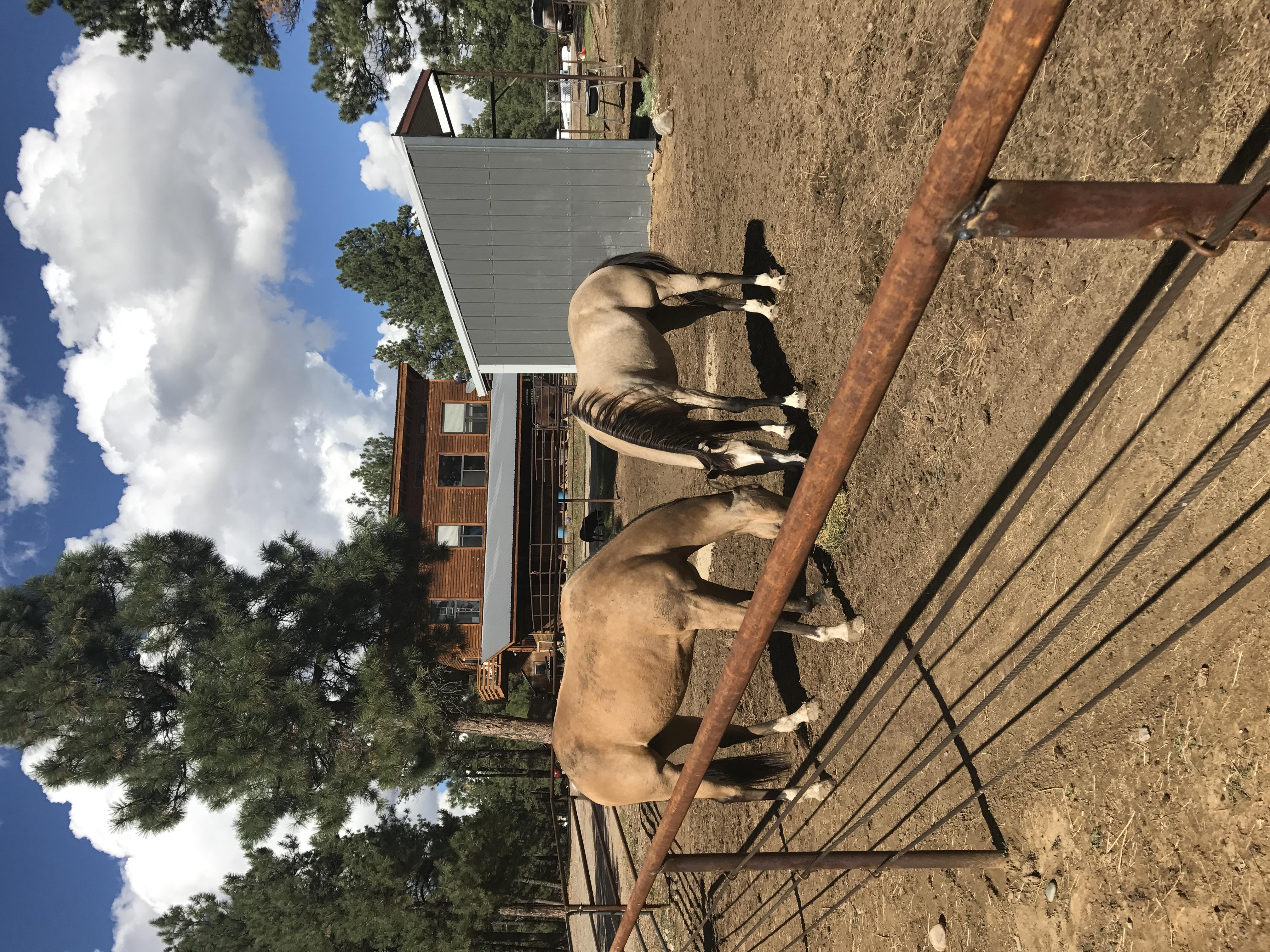 2 horses in paddock