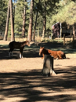 happy horses at horse motel