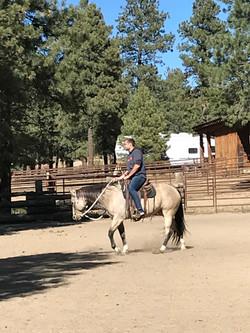 training arena sauls creek stables