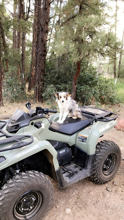 stable dog on four wheeler