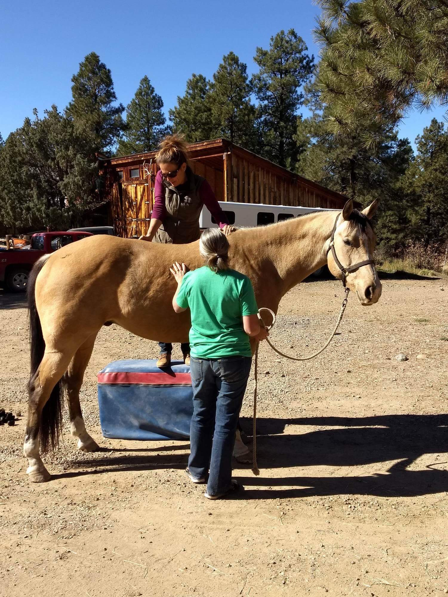 horse care at the horse stables