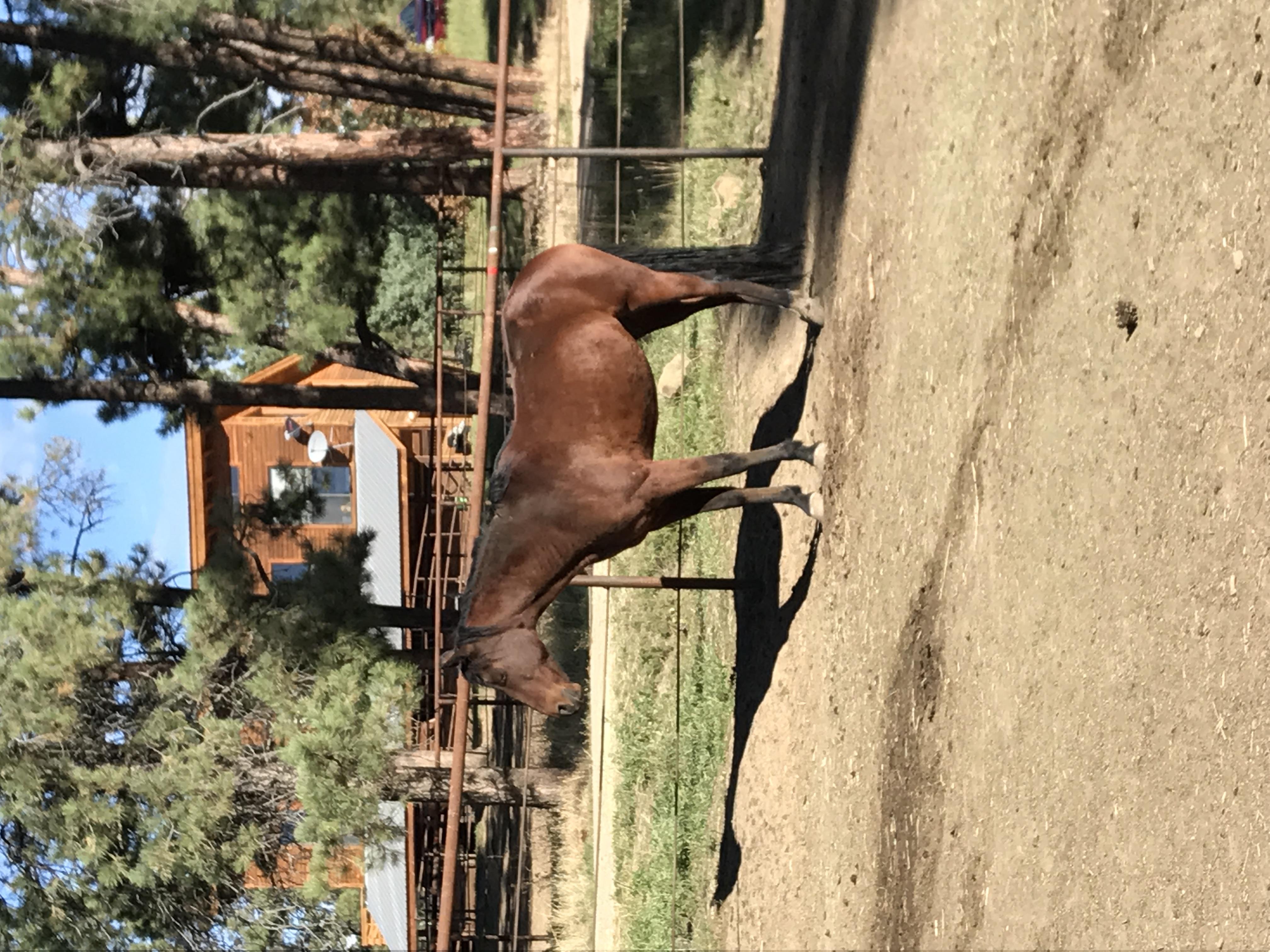 horse in an open paddock
