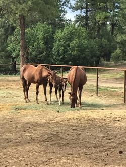 three horses eating hay